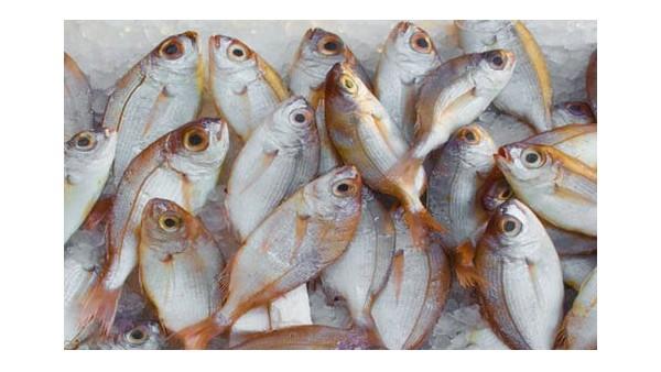 一家经验丰富的海鲜进口报关公司
