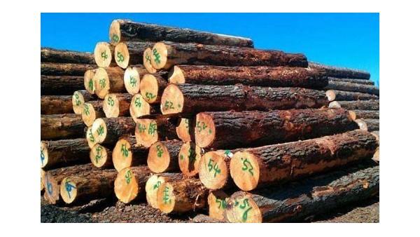 非洲奥克榄原木|进口报关流程