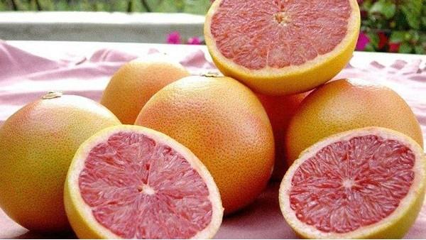 进口南非柑橘冷藏船运输检疫要求,运输途中冷处理操作程序