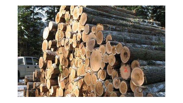 进口清关企业|木材进口报关代理企业哪家好?