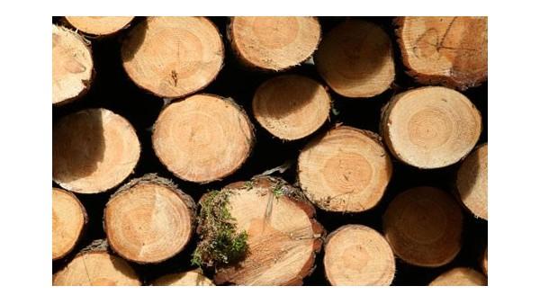 [案例分析]家具木材进口报关企业|南非木材进口清关流程
