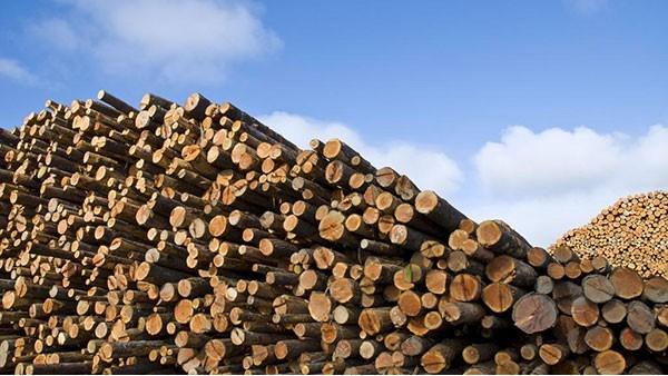 木材进口报关攻略,你想知道的都在这里!