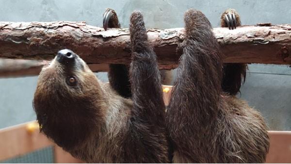 【案例分析】东莞首次食蚁兽野生动物千赢国际手机版官方网页报关