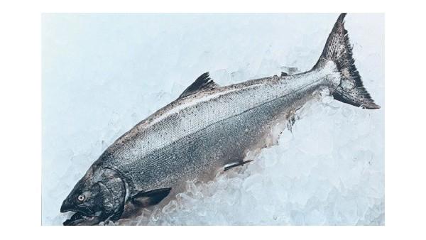 海鲜进口报关安全速度快
