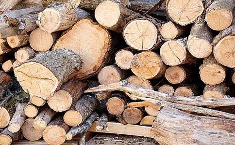 木材进口bg