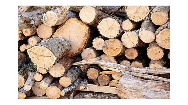 13年丰富经验的广州木材进口清关公司