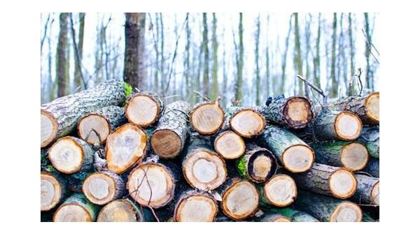 [完整详细版]原木材进口报关操作流程
