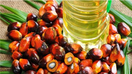 棕榈油进口清关