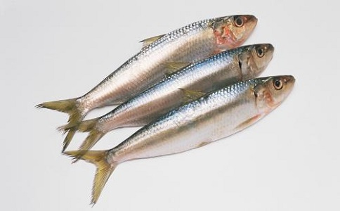 沙丁鱼进口报关