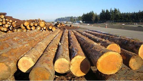 木材进口报关报检