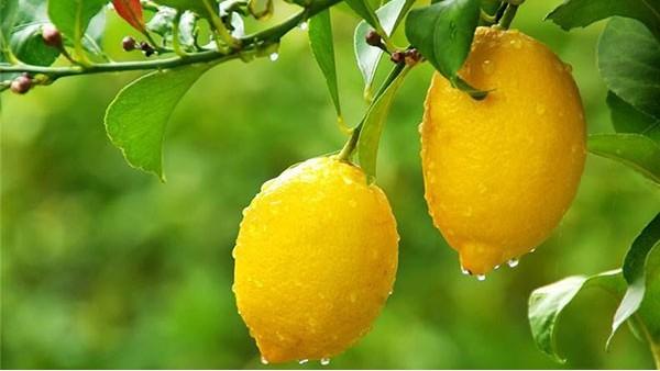水果进口报关,一文看懂水果进口细节