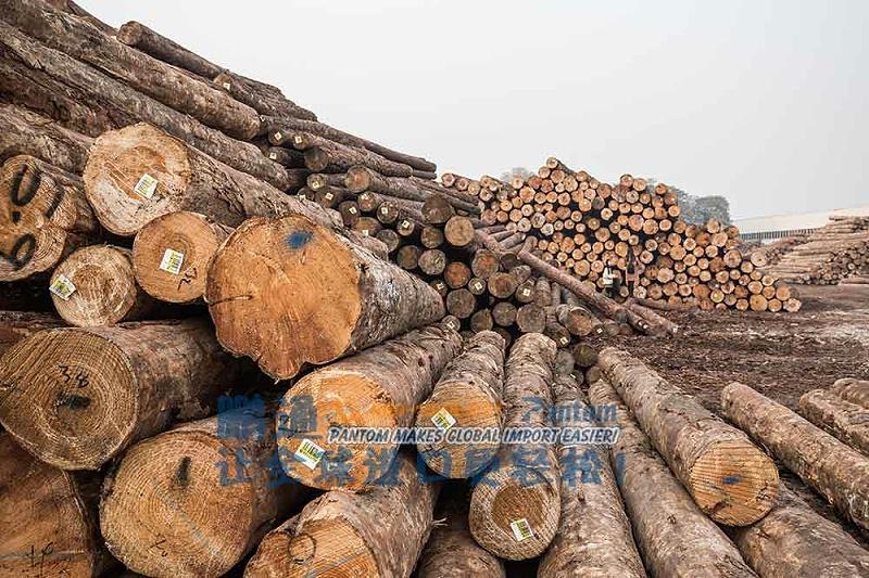 榉木原木进口案例