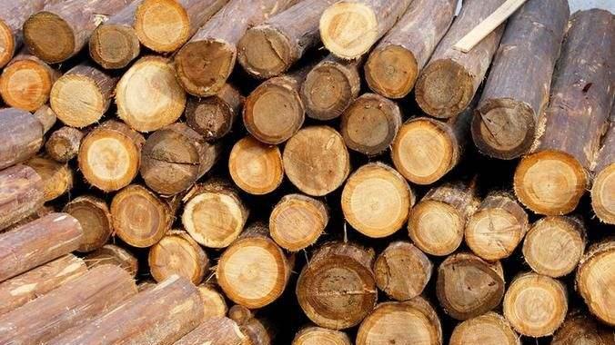进口木材十大港口及木材、木制品进口概况