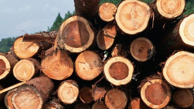 木材进口报关
