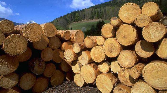 木材进口报关攻略