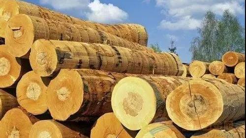 关于木材进口报关注意事项,这几点细节你要注意
