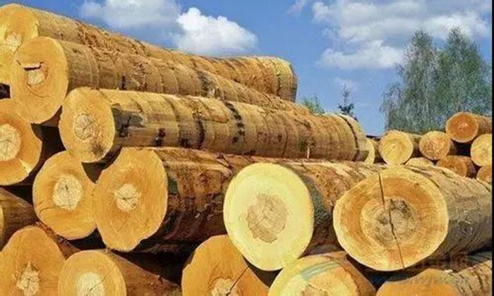 木材进口报关注意事项