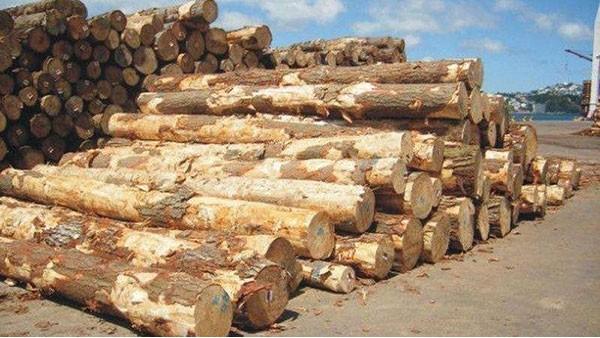 东莞木材进口报关手续流程