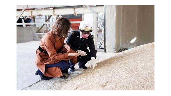 银川海关助力小麦进口报关