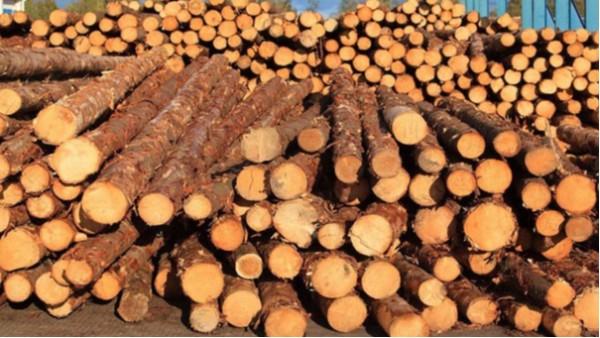 木材[快速]进口报关的流程操作
