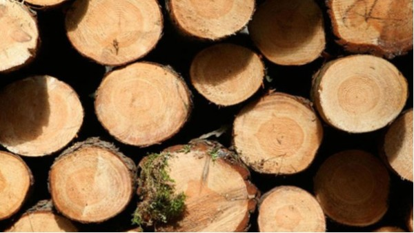 进口木材报检要哪些单证呢?