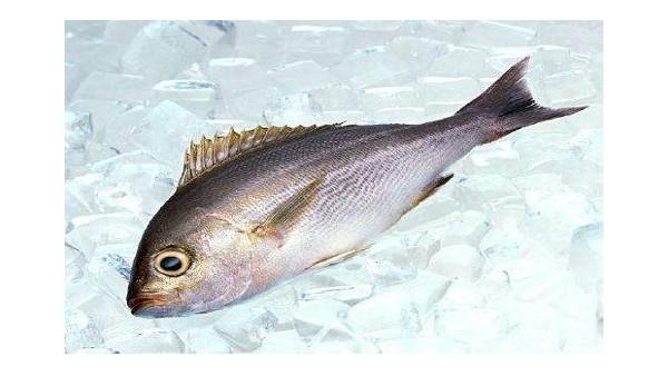 海鲜食品进口报关要做这些准备!