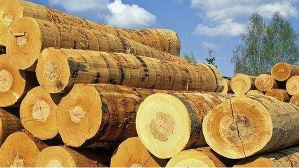 东莞木材进口报关
