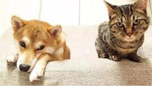 猫狗粮中转香港进口到国内流程
