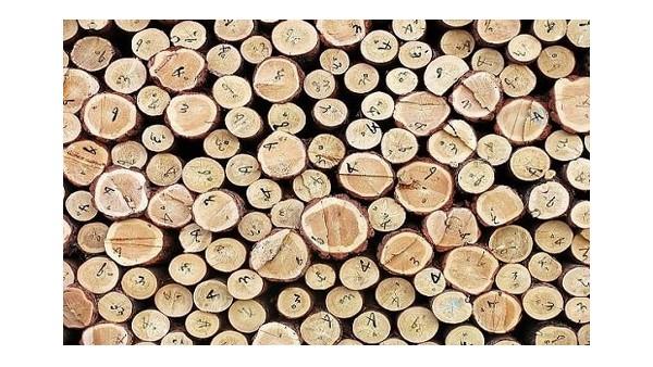 一家专业木材进口清关公司