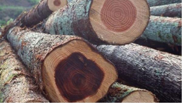 东莞新葡萄京娱乐场手机版在南沙港进口报关代理木材