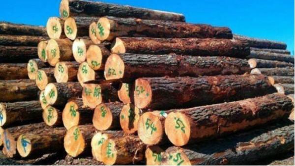 东莞进口清关企业[揭秘]木材进口服务费用清单