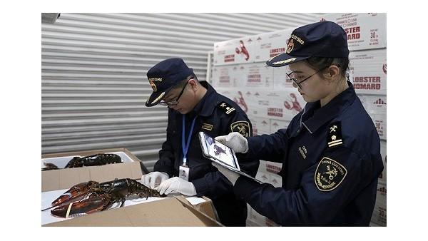 杭州机场海关口岸助力今年首批波士顿龙虾高效通关