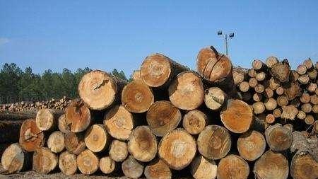 进口木材不知如何清关,东莞木材进口报关公司来解答