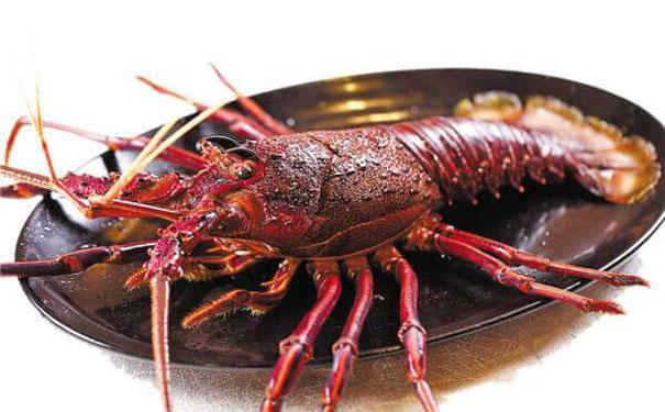 16澳洲龙虾d