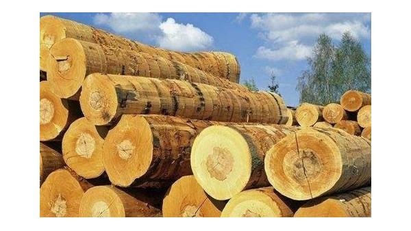 [案例分析]加拿大木材进口报关|专业清关企业代理