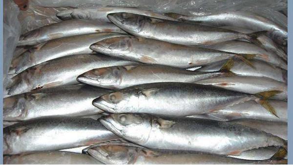 千赢国际手机版官方网页冷冻鱼需要哪些条件和资料
