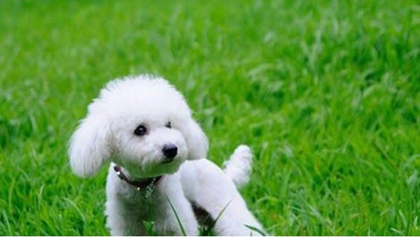 宁波海关:携带宠物入境有新规